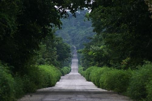 _calakmul_road.jpg