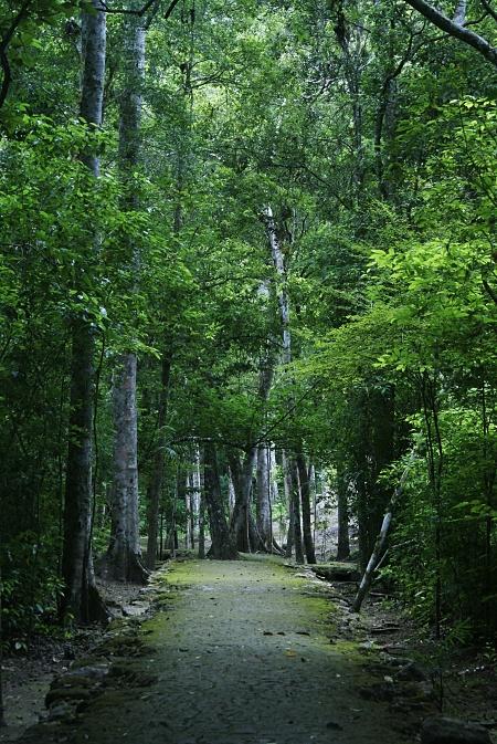 _trail.jpg